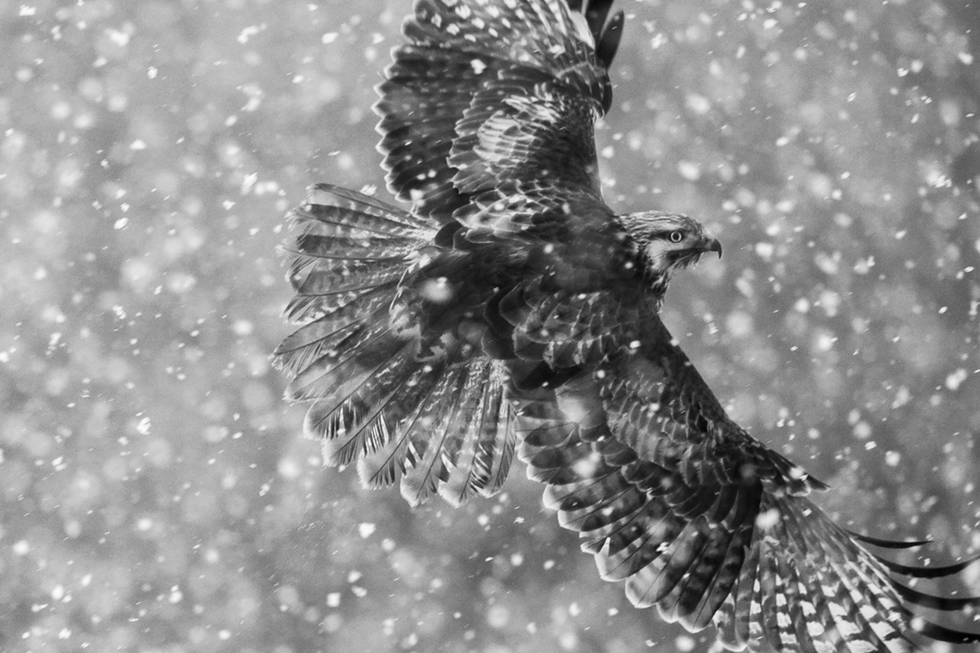 Flying in the snow storm