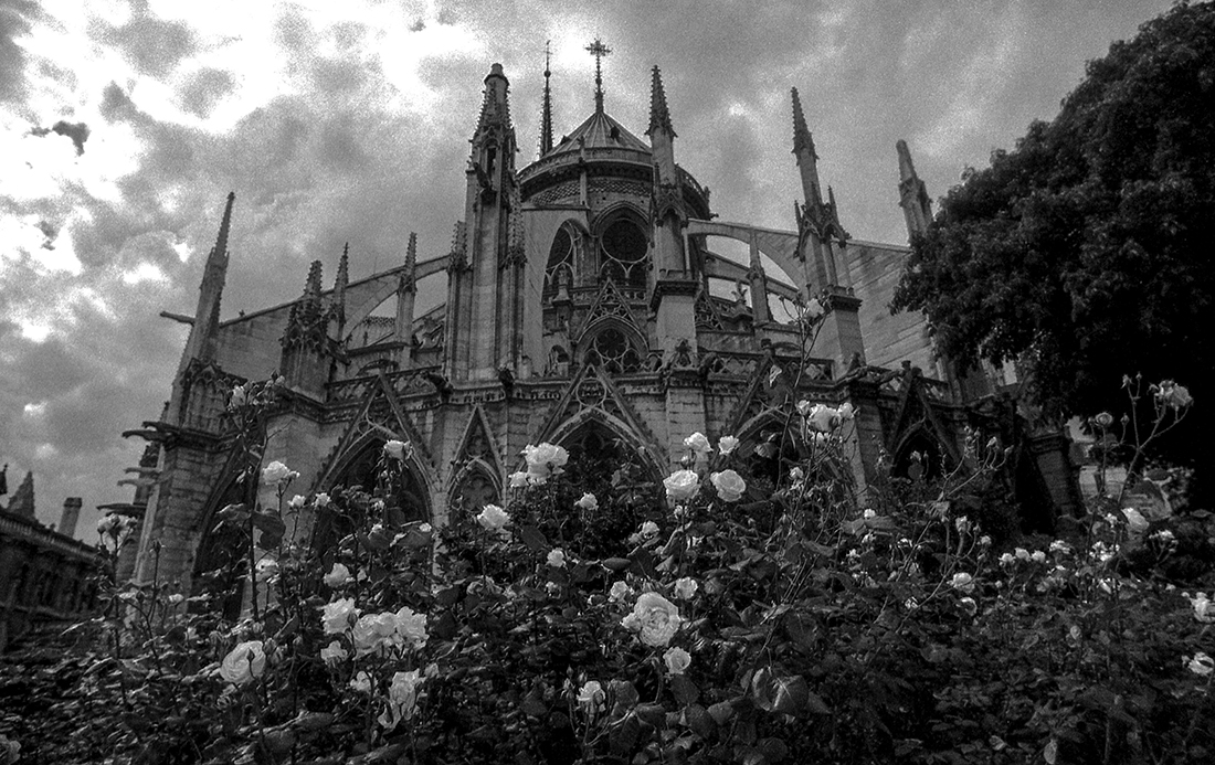 Roses for Notre Dame