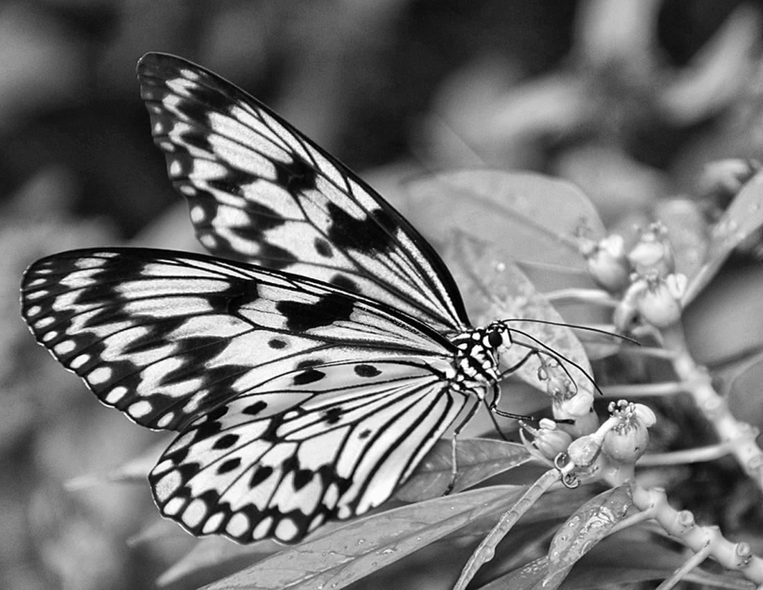 What's Black & White and Flies ?