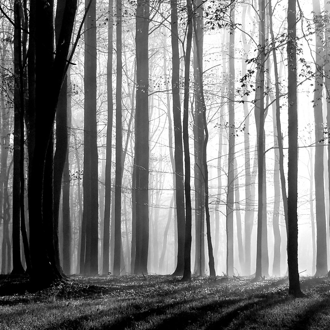 A Fading Forest