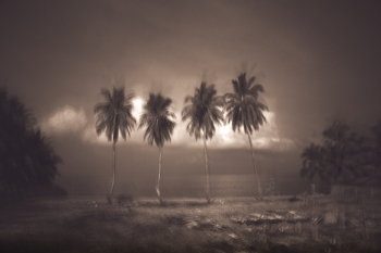 coconut trees in south Thailand .