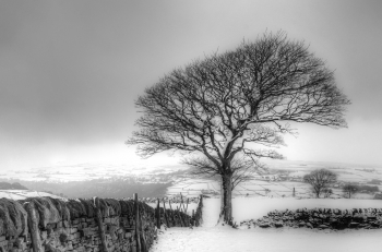 Lone Tree Winter