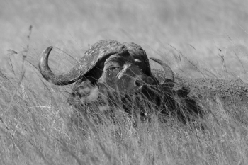 Old Man of the Mara