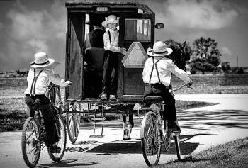 Old Order Amish Children with Buggies