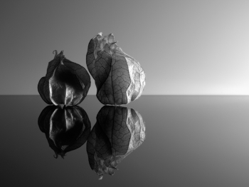 fragility of the physalis