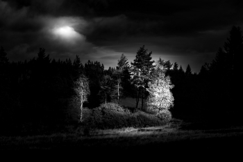 Black Forest in Black and White