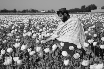 People of the Poppy Fields