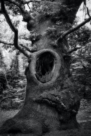 The Screaming Tree