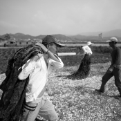 Toilers of the sea - Sea harvesting in Fujian, China