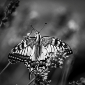Beautiful Black and White Butterfly Macro Photos